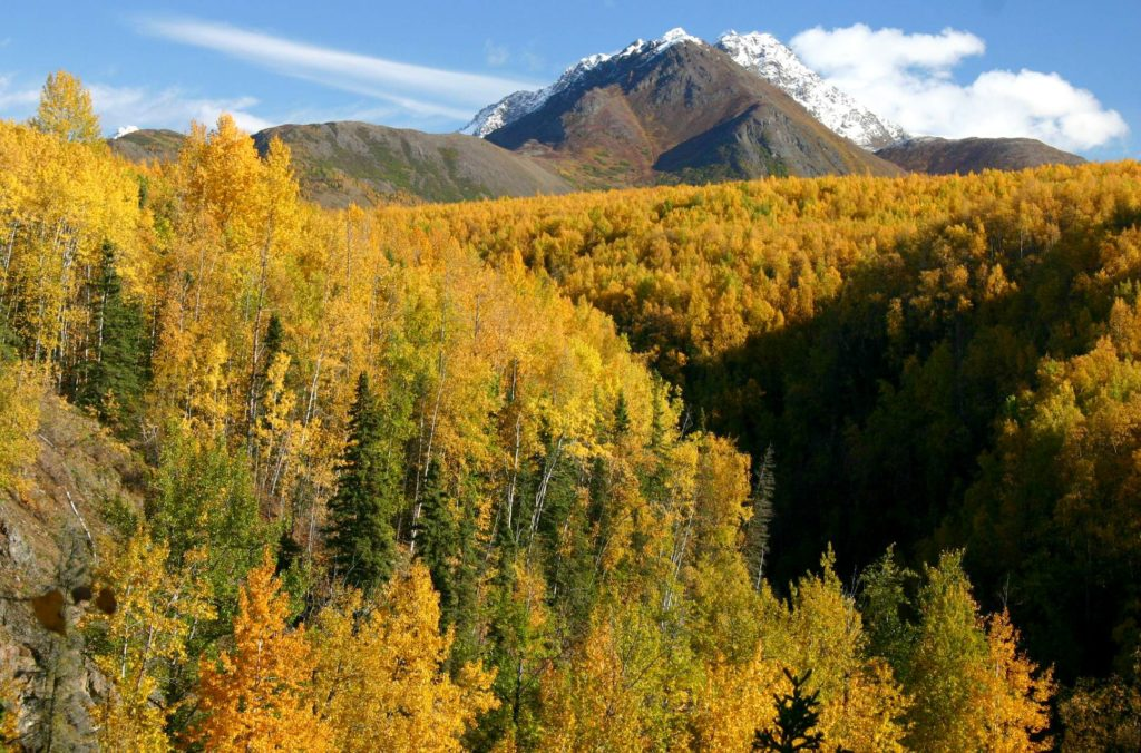 alaska-fall-colors-2-5